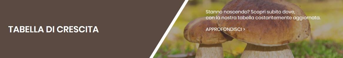 crescita funghi
