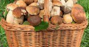 Funghi di Agosto