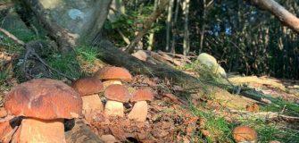 Funghi di settembre